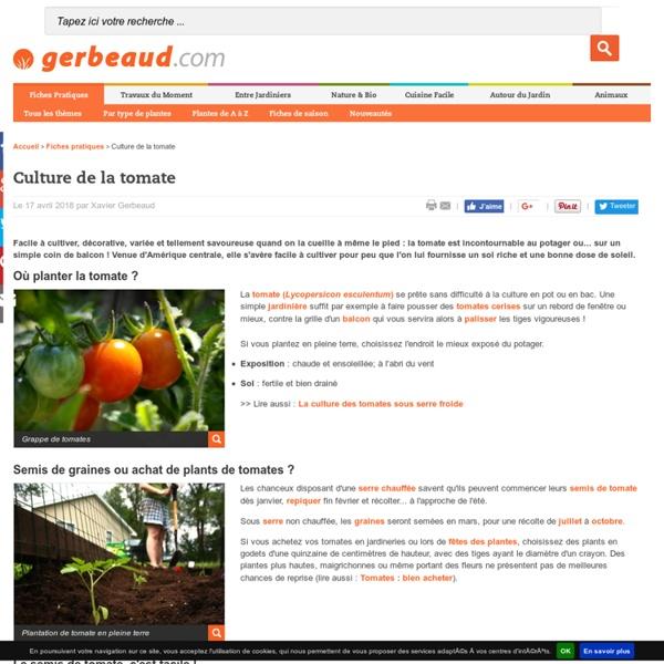 Tomate : conseils de culture et plantation