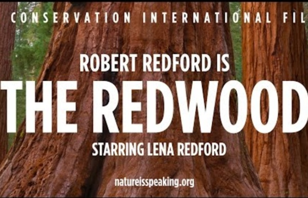 Nature Is Speaking – Robert Redford is The Redwood