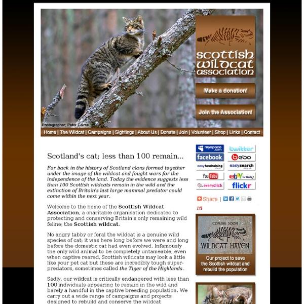 Scottish Wildcat Association