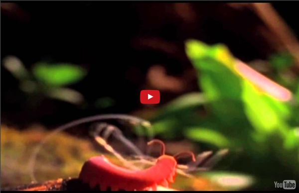 The Coolest Nature Video Ever [Edited By Roen Horn]