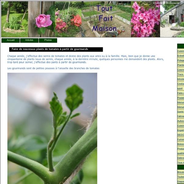 Faire de nouveaux plants de tomates à partir de gourmands - tout fait maison entretien de la maison cuisine cosmétiques potager légumes plantes médicinales