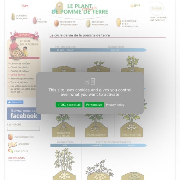 le cycle de vie de la pomme de terre le plant fran ais de pomme de terre pearltrees. Black Bedroom Furniture Sets. Home Design Ideas