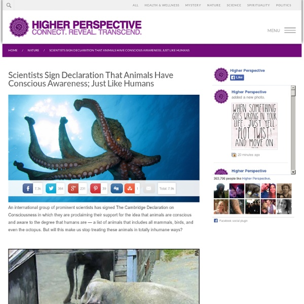Scientists Sign Declaration That Animals Have Conscious Awareness; Just Like Humans