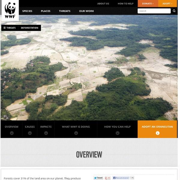 WWF: Deforestation Main Page