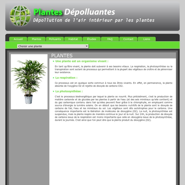 Plantes d polluantes d pollution de l air int rieur par les plantes pearl - Depollution par les plantes ...