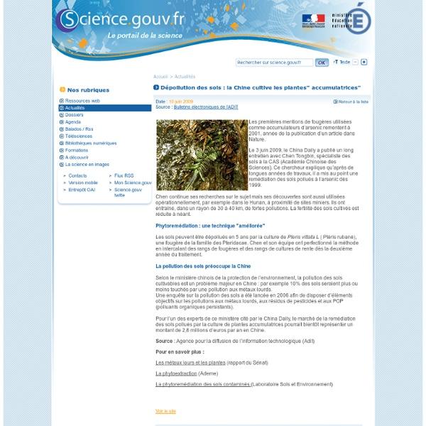"""Dépollution des sols : la Chine cultive les plantes"""" accumulatrices"""""""