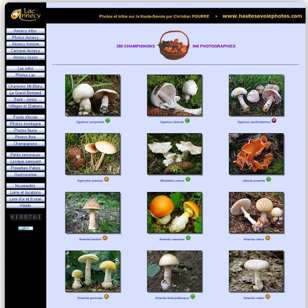 946 photos et désignations scientifiques de champignons de Haute-Savoie