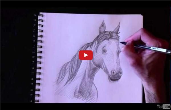 Dessiner un buste de cheval