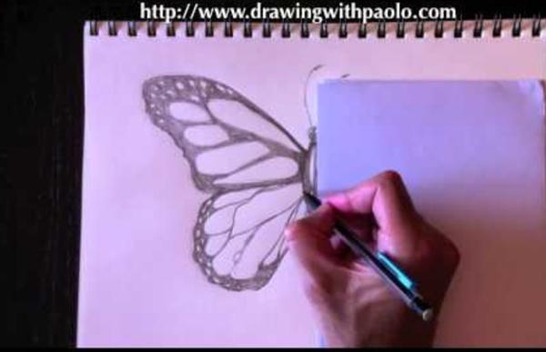Dessiner un papillon avec paolo morrone pearltrees - Dessiner un papillon ...