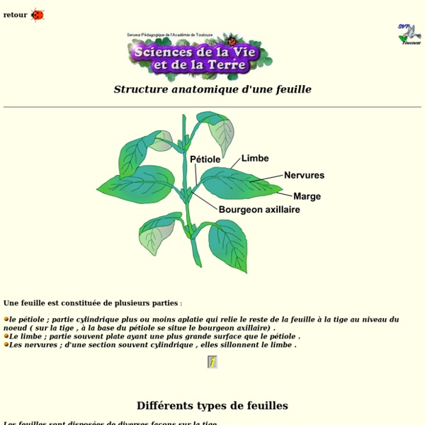 Morphologie des feuilles
