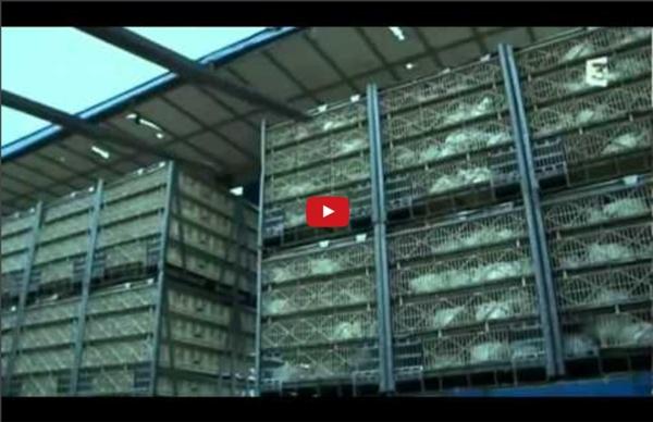 Documentaire Adieu veau, vache, cochon, couvée