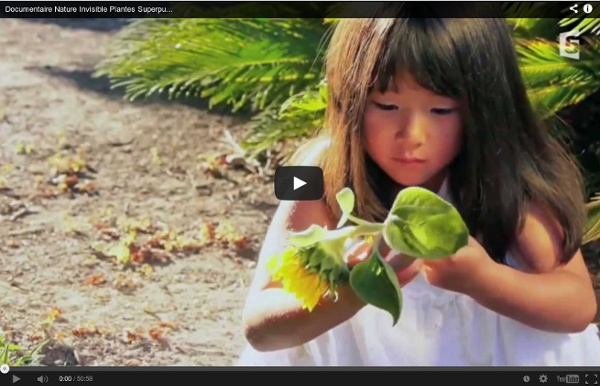 Documentaire Nature Invisible Plantes Superpuissantes Fr 2013