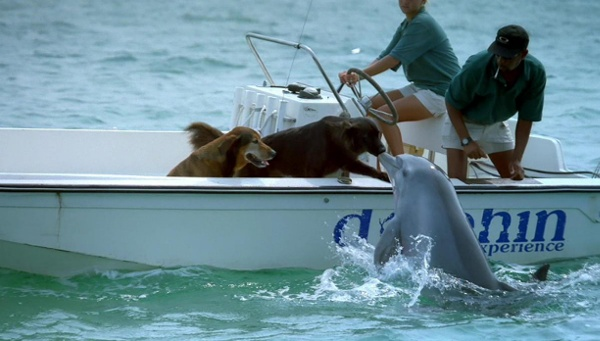 Dog_dolphin.jpg from animalliberationfront.com