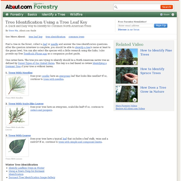 Tree Identification Using a Tree Leaf Key - Name a Tree by Studying its Leaf