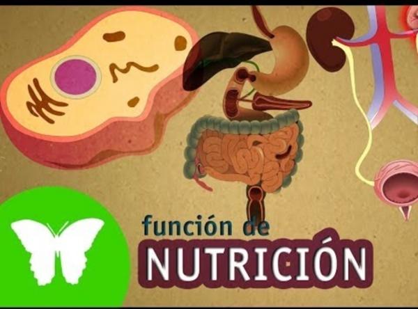 La Eduteca - La función de nutrición