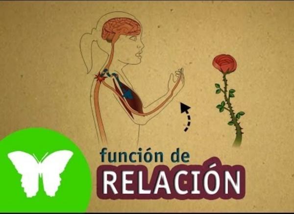 La Eduteca - La función de relación