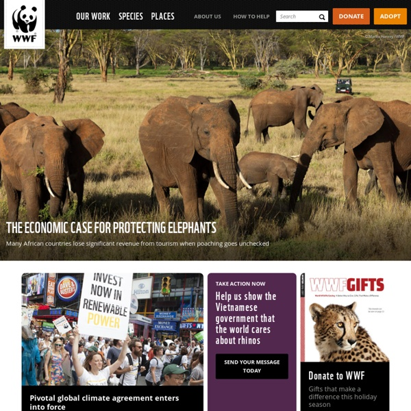 the world wildlife foundation successes and difficulties in protecting various engendered species Biodiversity is the fabric of life when one tugs at a single thing in nature, he finds it attached to the rest of the world- john muir gwc is a global force for the conservation of wildlife.