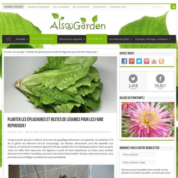 Planter les épluchures et restes de légumes pour les faire repousser !