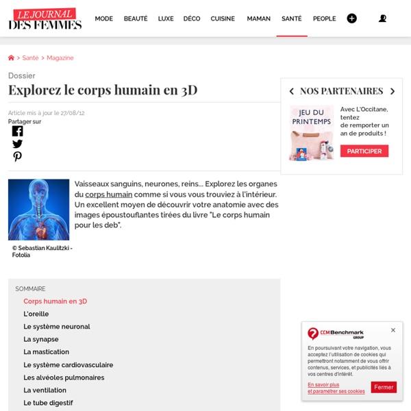 Explorez le corps humain en 3D - L'Internaute Santé