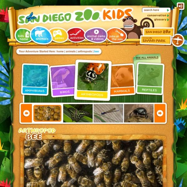 Bee Facts For Kids: Bee, Honey Bee, Bee Pictures