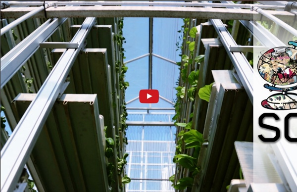 Feeding 9 Billion: Vertical Farming - Singapore