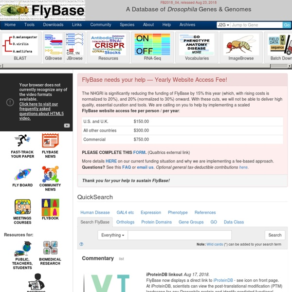 FlyBase Homepage