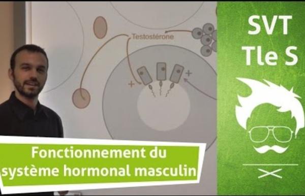 Vidéo 10 : Description du fonctionnement du système hormonal masculin de reproduction (vidéo - 3,41min)