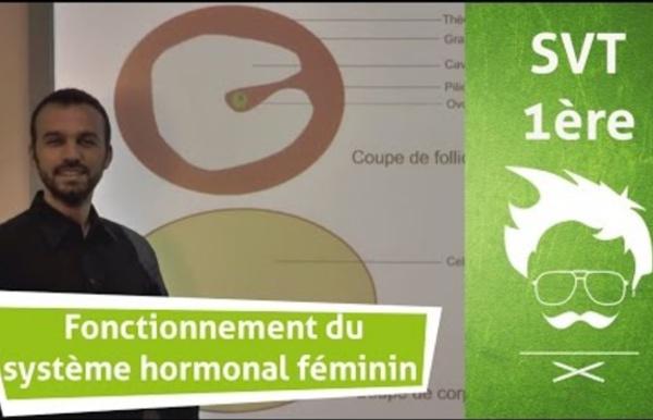 Vidéo 9 : Description du fonctionnement du système hormonal féminin de reproduction (vidéo - 6min08)