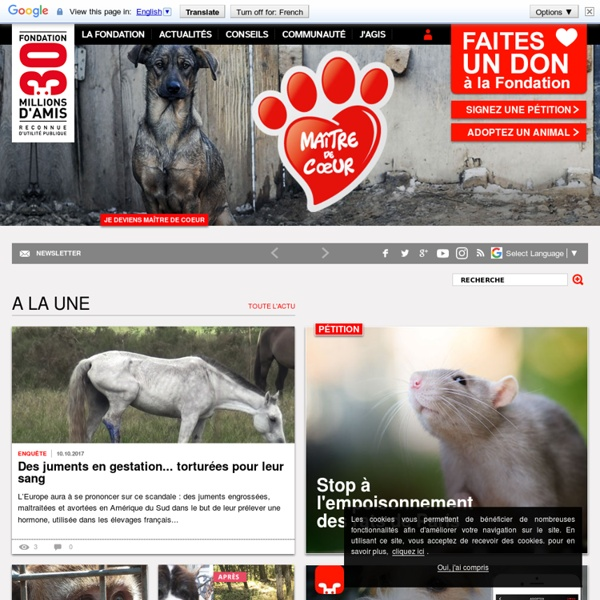 Fondation pour la défense et la protection des animaux, association et émission animalière