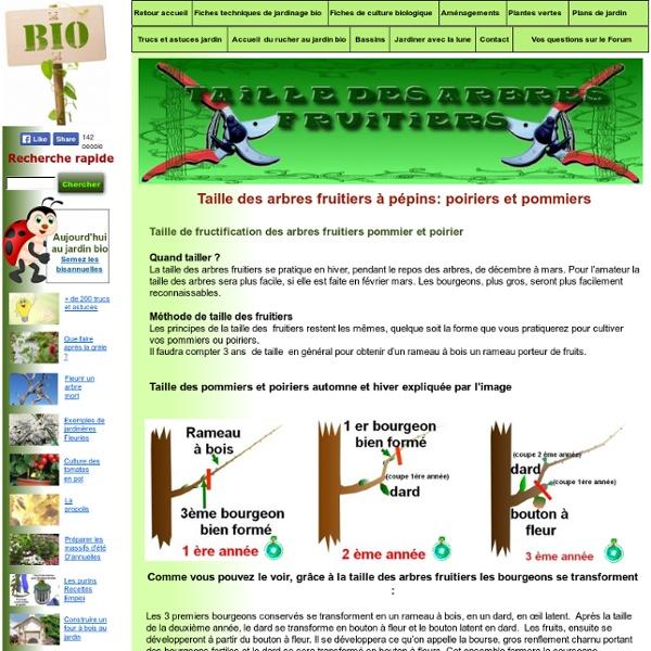 Taille des arbres fruitiers à pépins: taille de fructification: taille en vert.