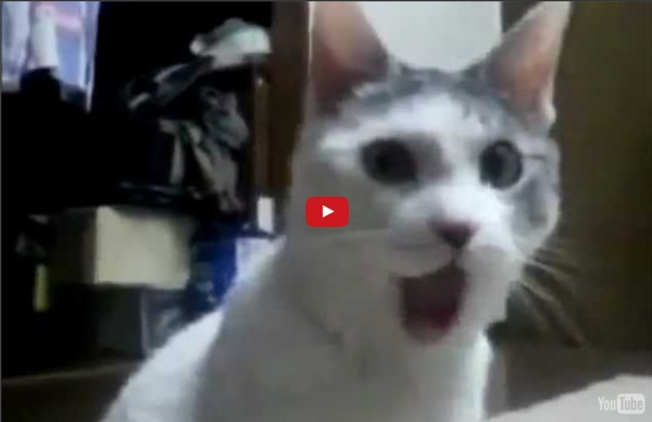Cats and dogs - Funny dog videos youtube Youtube funny cat videos