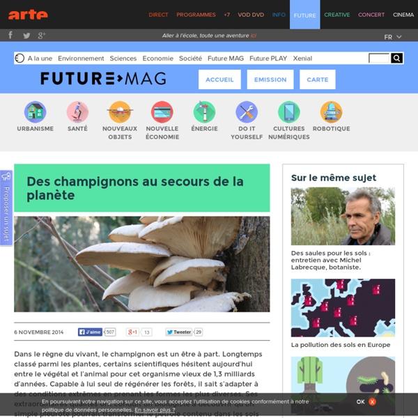 Des champignons au secours de la planète