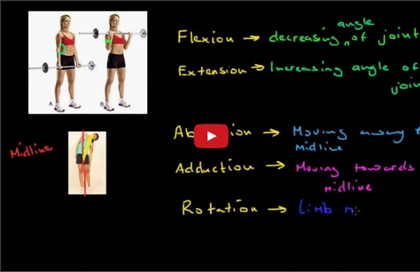 The Role of the Skeletal System