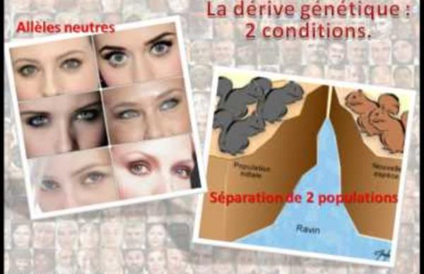 Dérive génétique et évolution