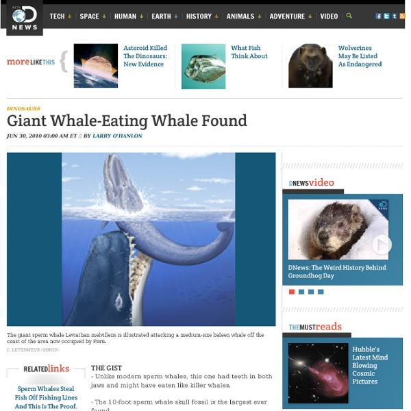 Extinct Giant Whale-Eating Whale Found