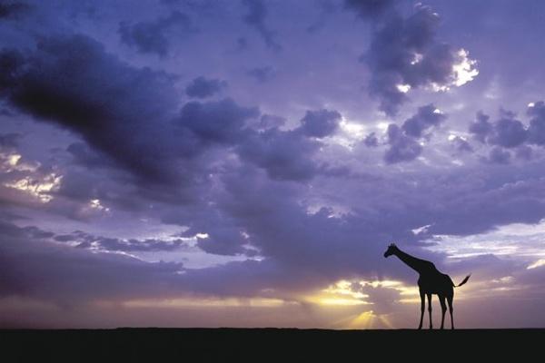 Giraffe.jpg (JPEG Image, 640x427 pixels)
