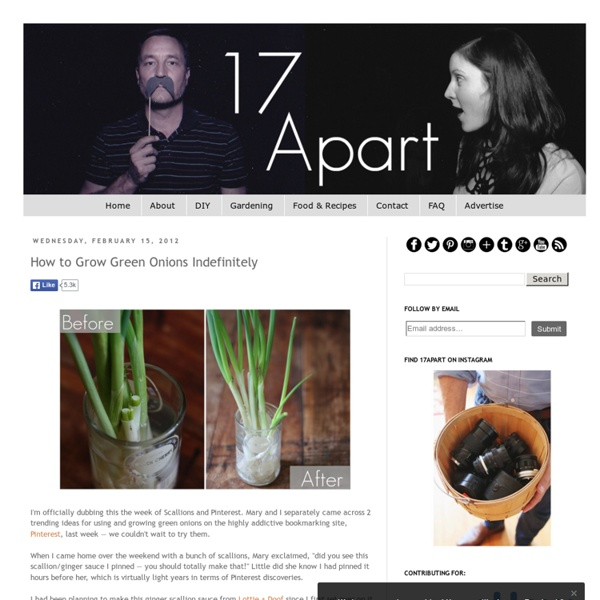 17 Apart: How to Grow Green Onions Indefinitely