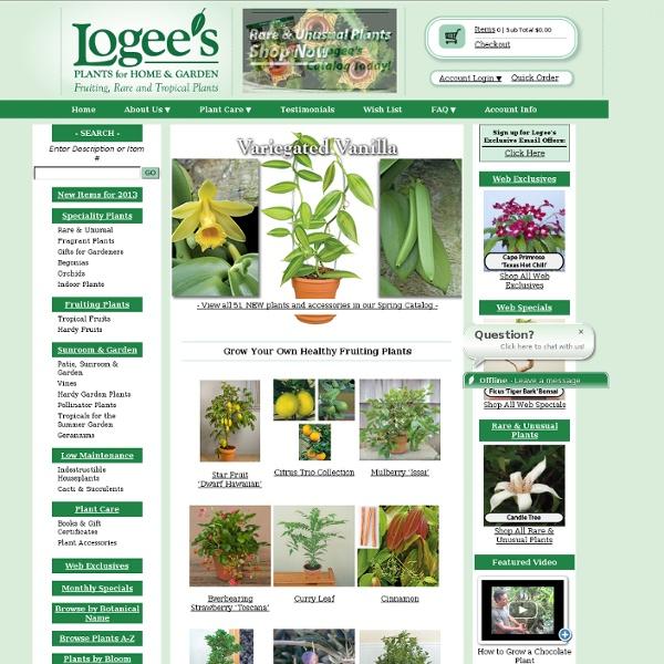 "Logee's Greenhouse-Hippophae rhamnoides 'Leikora' ""Sea Berry"""