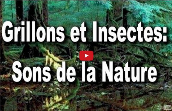 Grillons et Insectes: Bayou Bleue Sons de la Nature