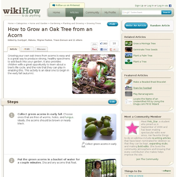 How to Grow an Oak Tree from an Acorn: 7 steps (with pictures)