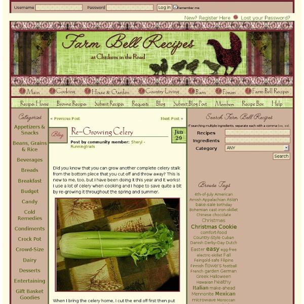 Re-Growing Celery