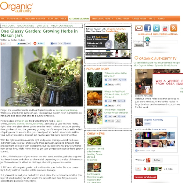 One Glassy Garden: Growing Herbs in Mason Jars