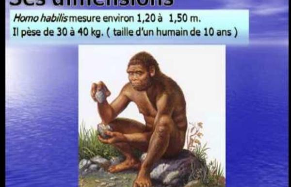 H2 Homo Habilis