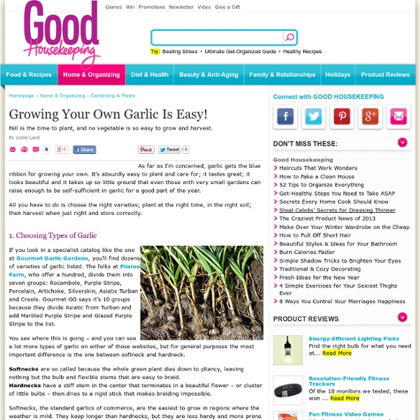 Growing Your Own Garlic
