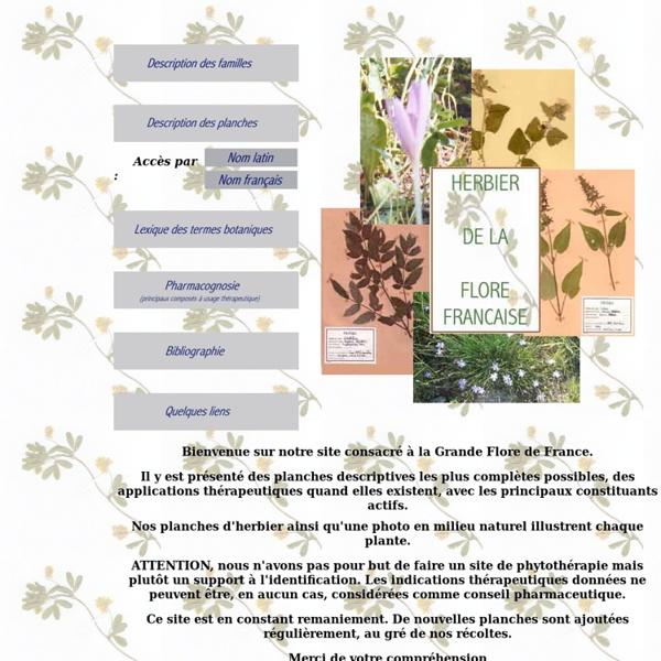 Herbier de la flore francaise