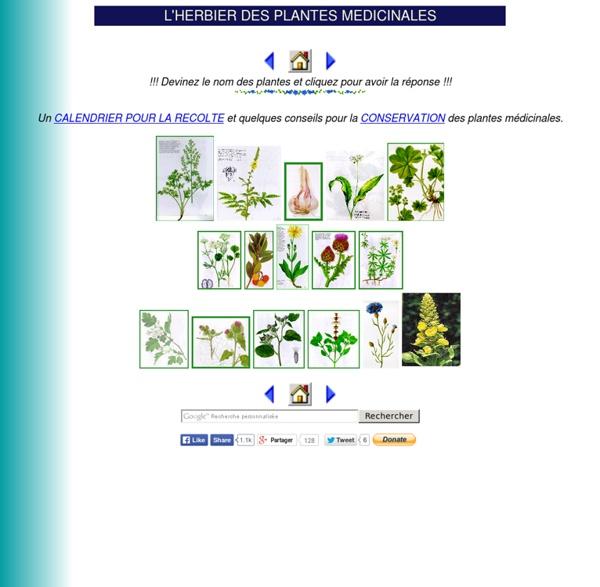 L'HERBIER DES PLANTES MEDICINALES