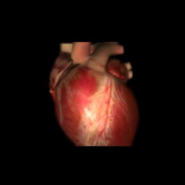 How the Heart Works 3D Video.flv