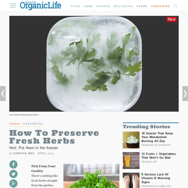 Preservation Guide: How to Freeze Herbs