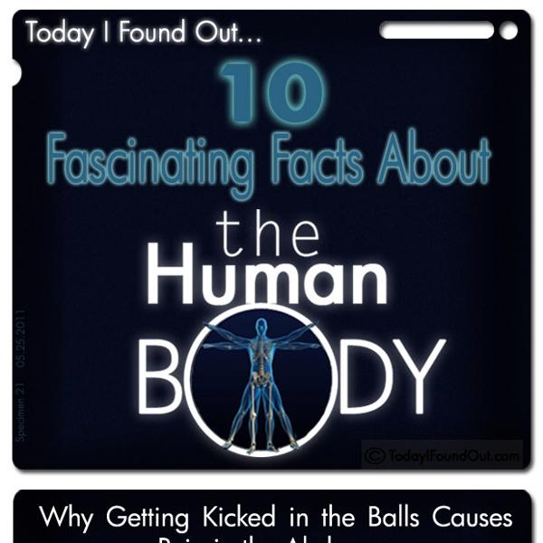 Human-Body-Facts-2-copy.jpg (620×8050)