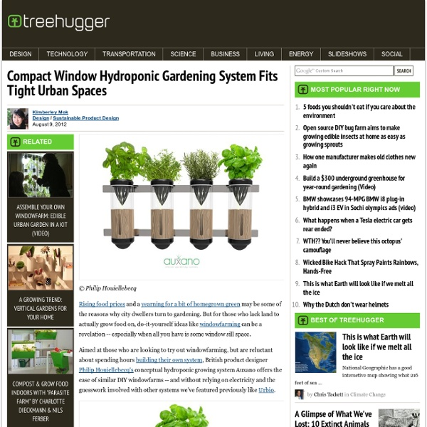 Compact Window Hydroponic Gardening System Fits Tight Urban Spaces